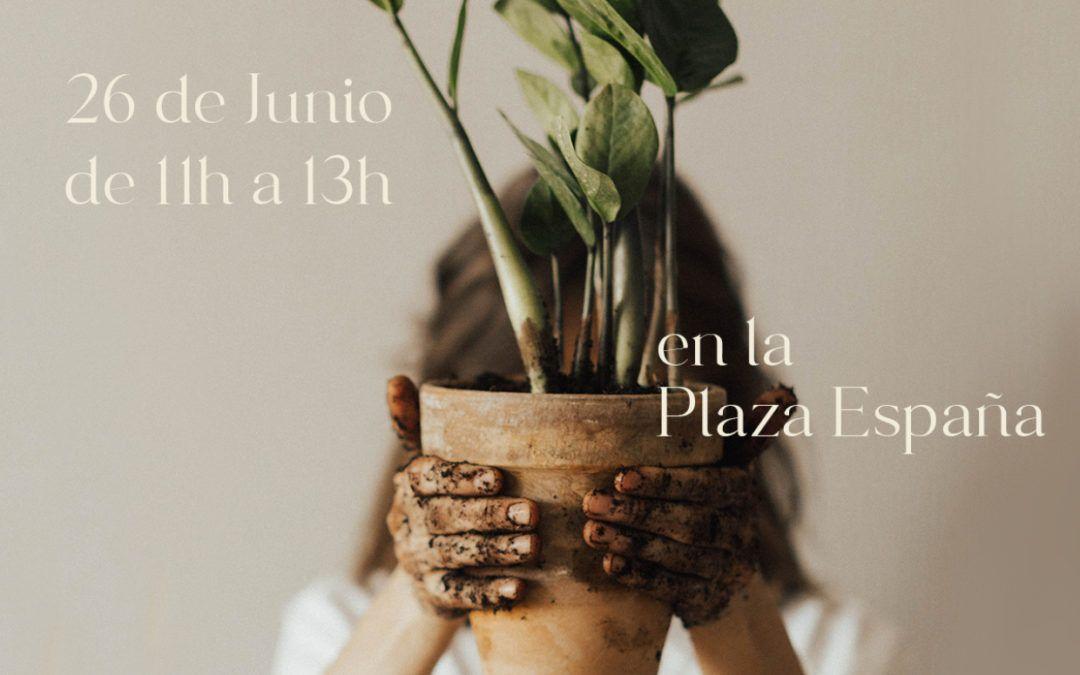 Primer concurso de macetas de Morata de Jalón